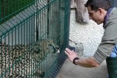 Training-medico-con-ghepardo-Acinonyx-Jubatus-
